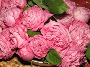 Γλυκό τριαντάφυλλο (2)